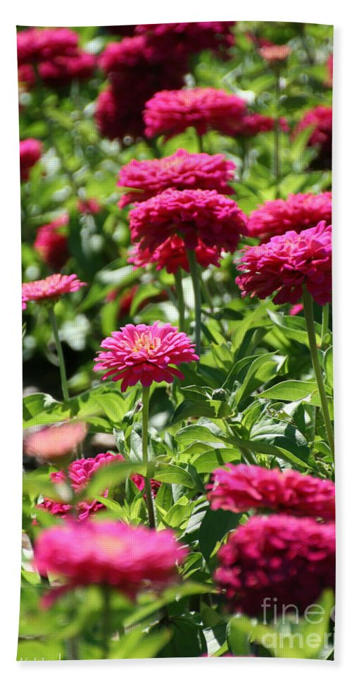 Flower Bath Sheet featuring the photograph Zinnia Palooza by Susan Herber