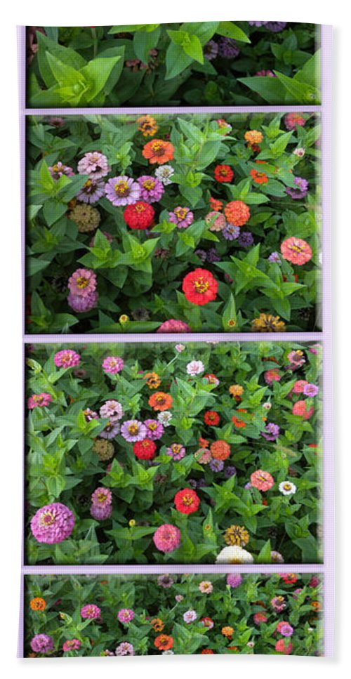Floral Bath Sheet featuring the photograph Zinnias 4 Panel Vertical Composite by Thomas Woolworth
