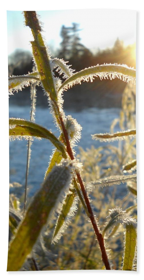 Close Up Bath Sheet featuring the photograph Frost On Willow At Sunrise by Kent Lorentzen
