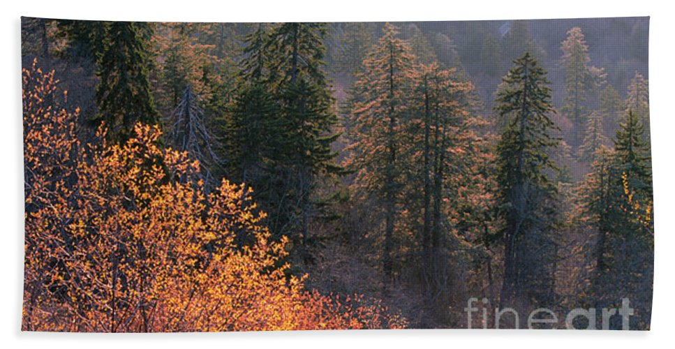 Hand Towel featuring the photograph Great Smoky Mountains Morning by Sandra Bronstein