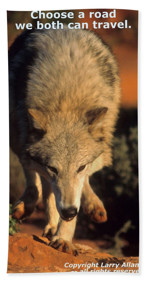Gray Wolf Bath Sheet featuring the photograph  by Larry Allan