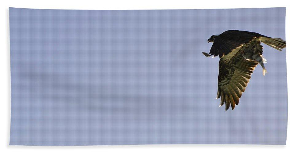 Osprey Bath Towel featuring the photograph Osprey Lunch To Go III by Christine Stonebridge