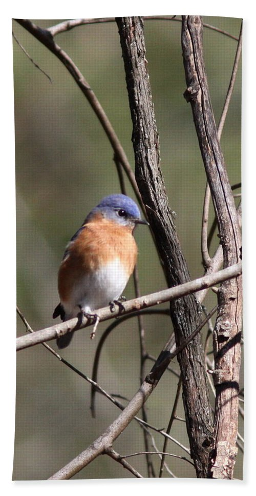 Blue Bath Sheet featuring the photograph Sucarnoochee River - Bluebird by Travis Truelove
