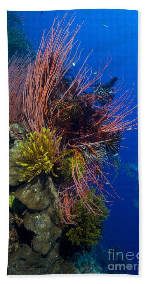 Anthozoa Bath Sheet featuring the photograph A Colony Of Red Whip Fan Corals by Steve Jones