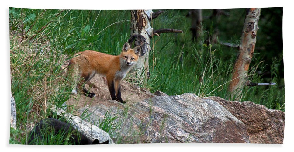 Fox Hand Towel featuring the photograph A Mixed Bag by Jim Garrison