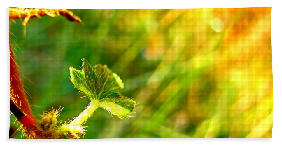 Nature Bath Sheet featuring the photograph A New Morning by Debbie Portwood