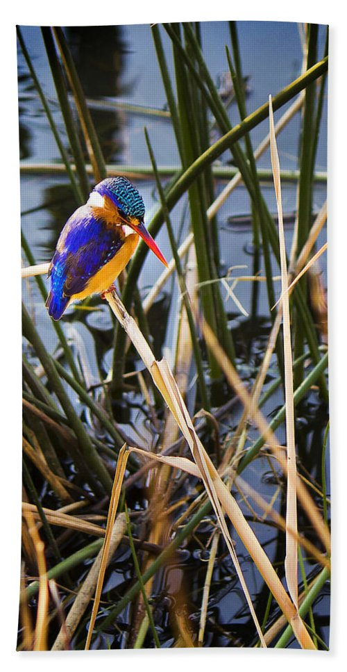 Small Bath Sheet featuring the photograph African Pigmy Kingfisher by Ronel Broderick