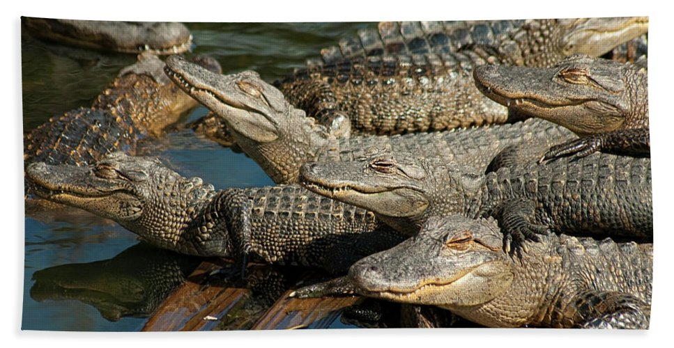 Alligator Bath Sheet featuring the photograph Alligator Pool Party by Carolyn Marshall