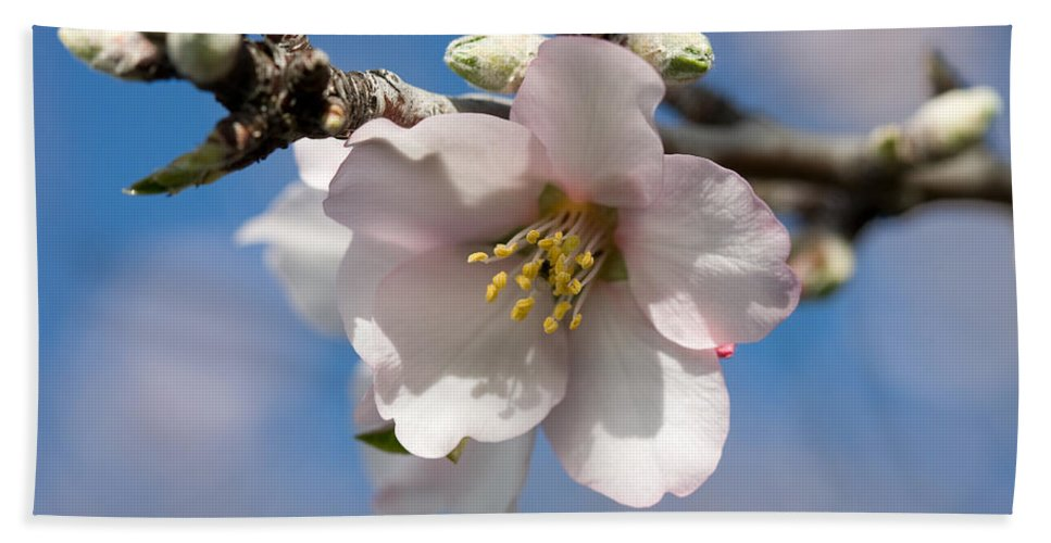 Almond Hand Towel featuring the photograph Almond Blossom by Ralf Kaiser