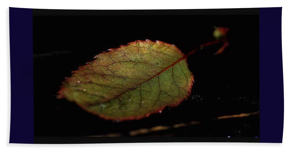 Nature Bath Sheet featuring the photograph Changes by Marija Djedovic