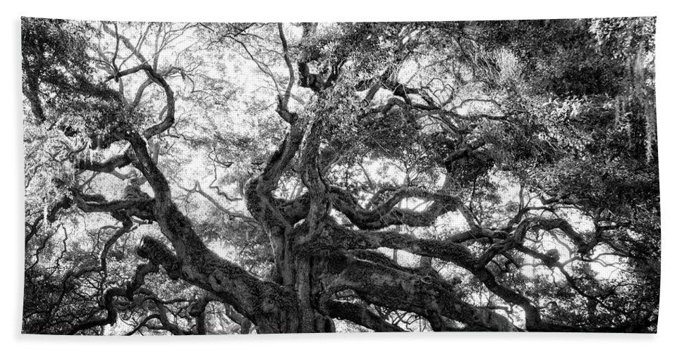 Angel Oak Hand Towel featuring the photograph Angel Oak by Lynne Jenkins