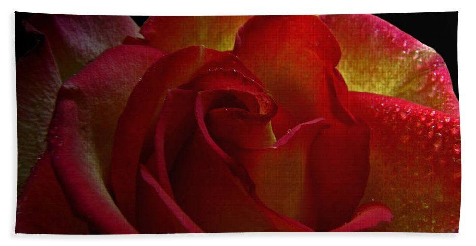 Nature Bath Sheet featuring the photograph Annaversary Rose I by Debbie Portwood