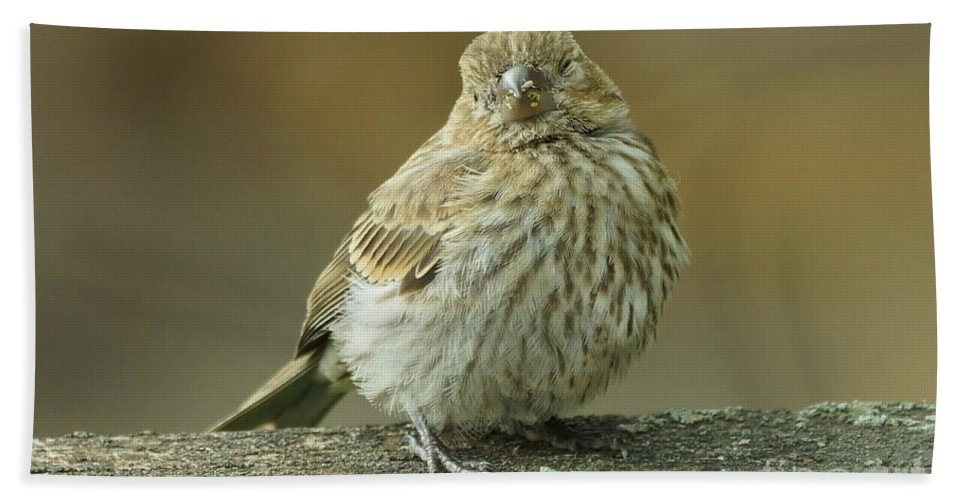 House Finch Bath Sheet featuring the photograph Baby House Finch by Lori Tordsen