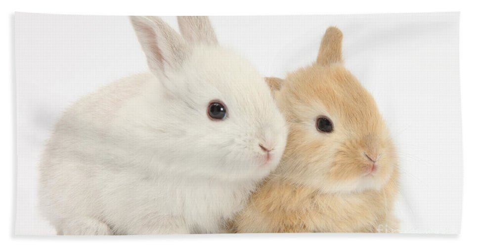 Animal Hand Towel featuring the photograph Baby Lop Rabbits by Mark Taylor