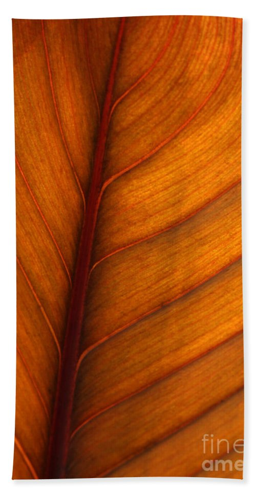 Leaf Hand Towel featuring the photograph Backlit Leaf by Sabrina L Ryan