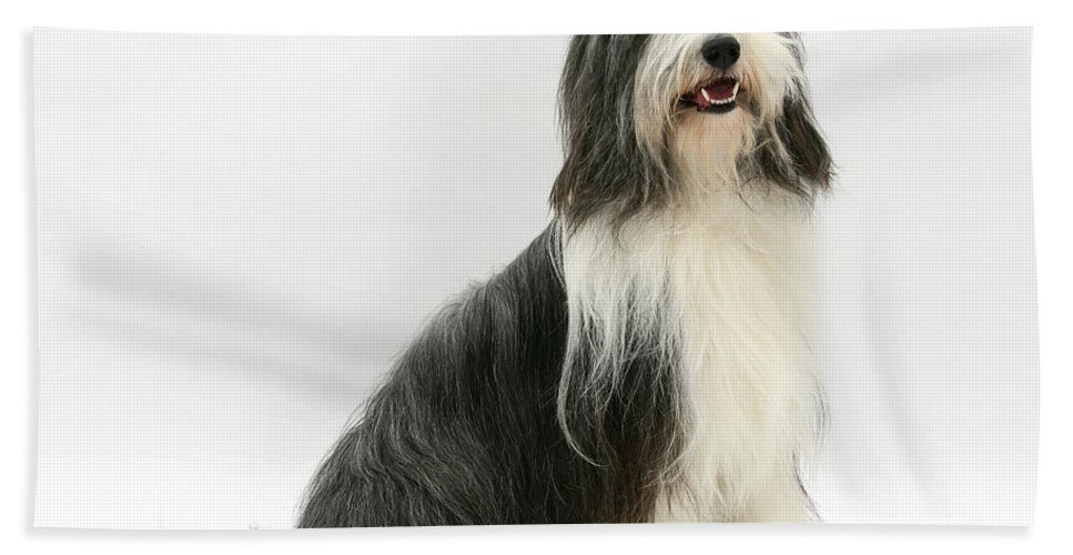 Animal Hand Towel featuring the photograph Bearded Collie by Mark Taylor