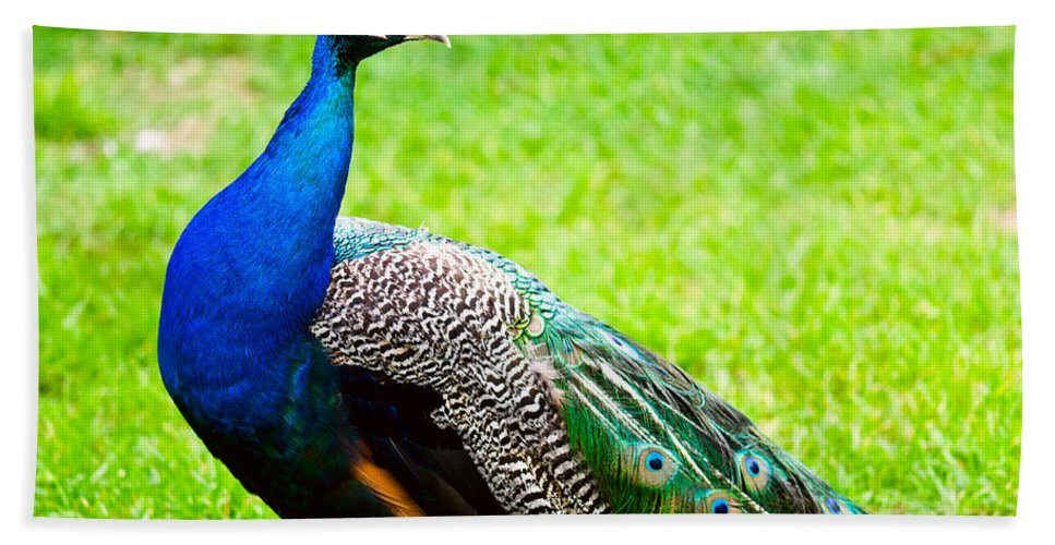 Adult Bath Sheet featuring the photograph Beautiful And Pride Peacock On A Lawn by U Schade