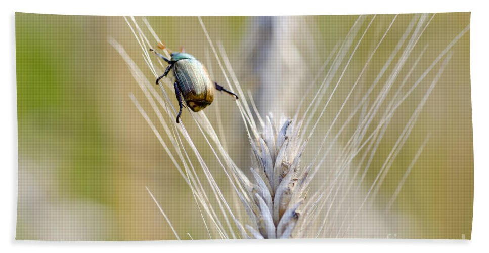 Beetle Hand Towel featuring the photograph Beetle On The Wheat by Mats Silvan