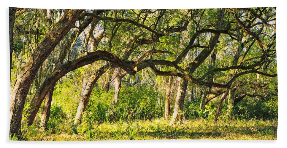 Beaufort County Bath Sheet featuring the photograph Bent Trees by Phill Doherty