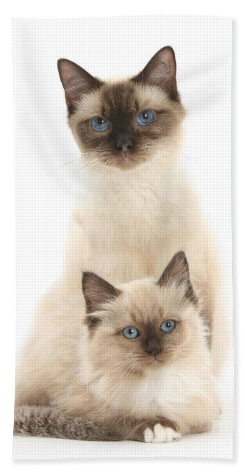 Animal Hand Towel featuring the Birman-cross Cat And Kitten by Mark Taylor