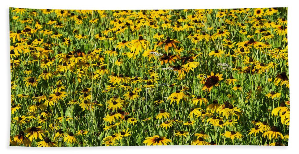 Asteraceae Bath Sheet featuring the photograph Black Eyed Susan by John Greim