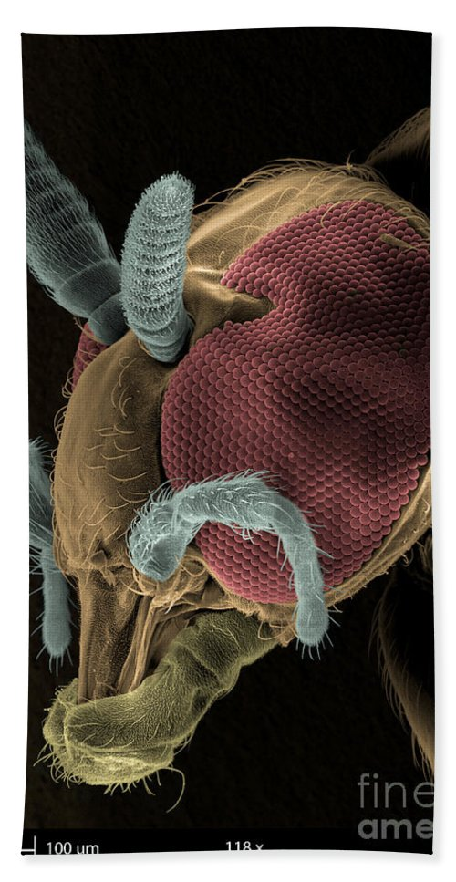 Sem Hand Towel featuring the photograph Black Fly Sem by Ted Kinsman