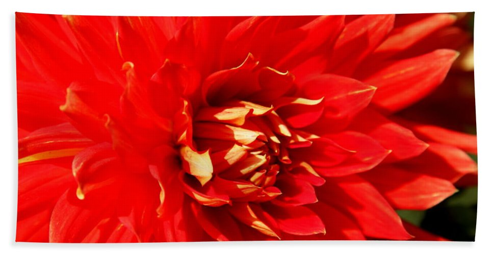 Red Dahlia Bath Sheet featuring the photograph Blazing Red by Christiane Schulze Art And Photography