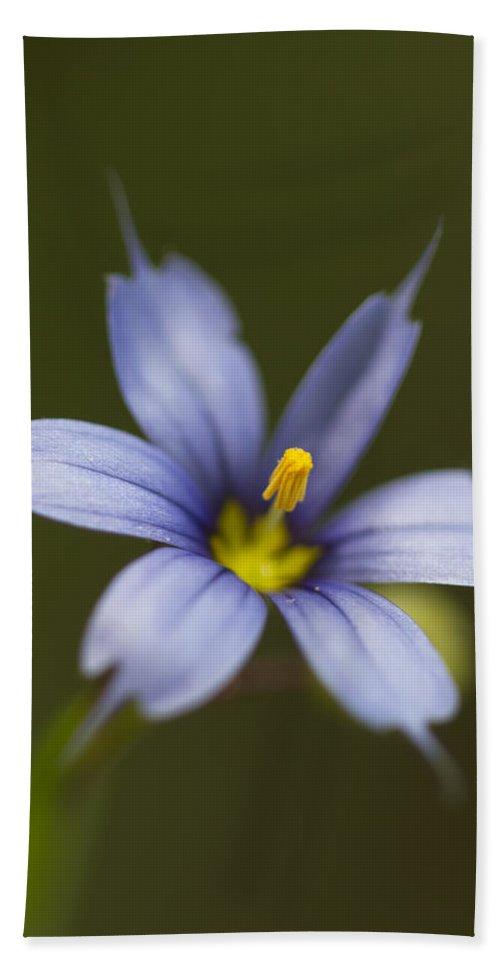 Sisyrinchium Angustifolium Bath Sheet featuring the photograph Blue-eyed Grass Wildflower - Sisyrinchium Angustifolium by Kathy Clark