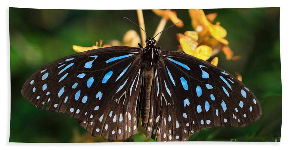 Blue Bath Sheet featuring the photograph Blue Glassy Tiger Butterfly by Louise Heusinkveld