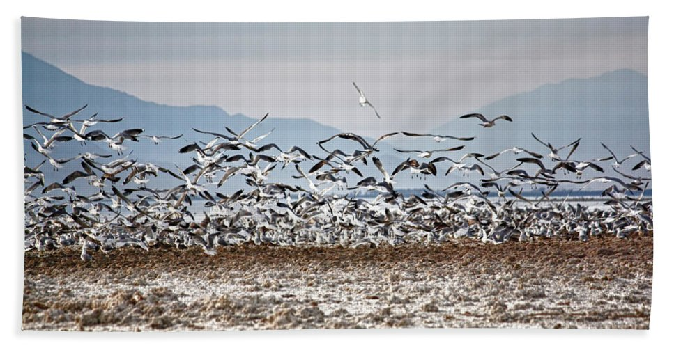 Desert Landscape Bath Sheet featuring the photograph Bombay Beach Birds by Linda Dunn