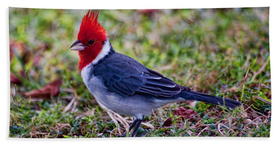 kualoa Regional Park Bath Sheet featuring the photograph Brazillian Red-capped Cardinal by Dan McManus