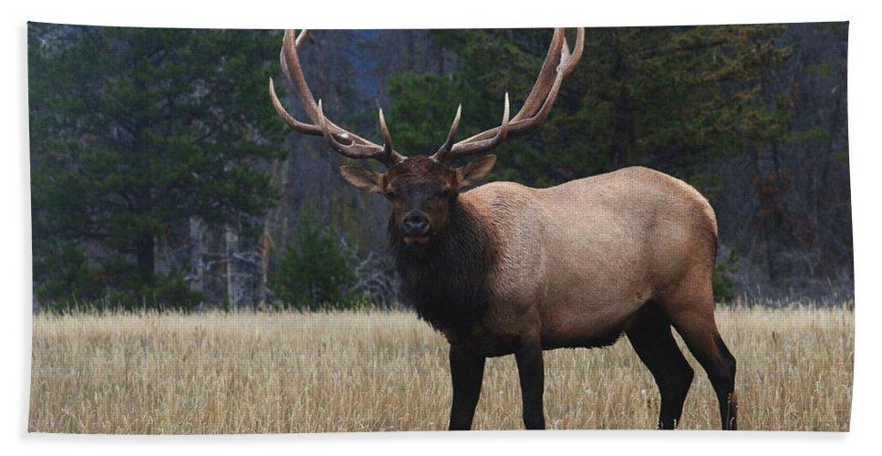 Elk Bath Sheet featuring the photograph Bull Elk by Bob Christopher