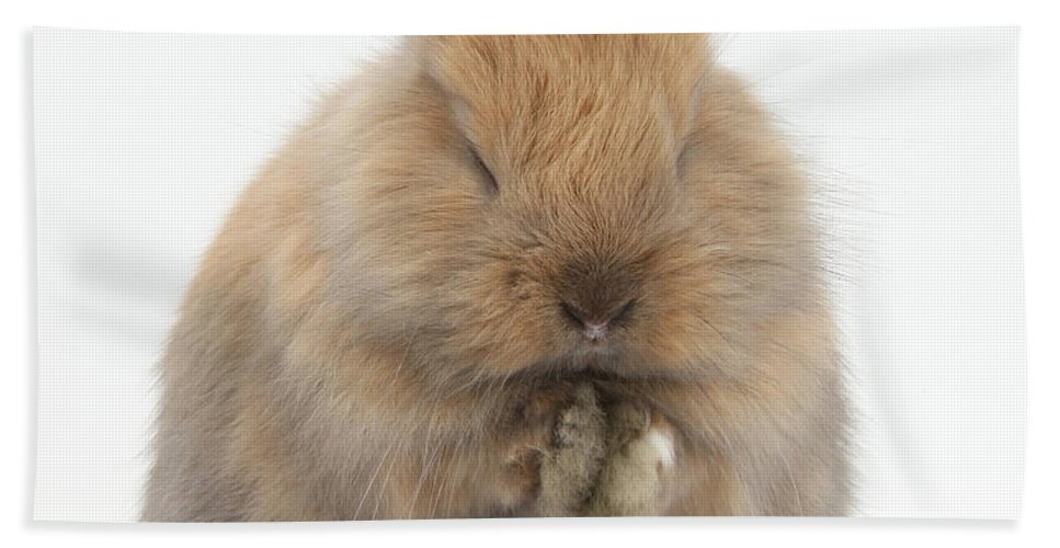 Nature Hand Towel featuring the photograph Bunny Grooming by Mark Taylor