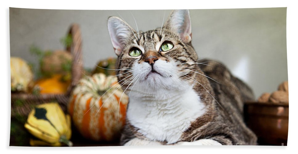 Cat Bath Sheet featuring the photograph Cat And Pumpkins by Nailia Schwarz