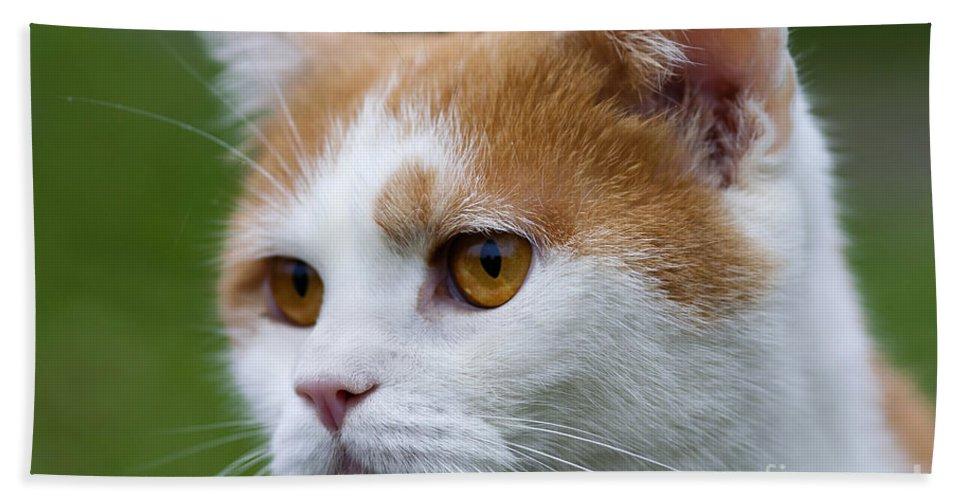 Tomcat Bath Sheet featuring the photograph cat by Michal Boubin