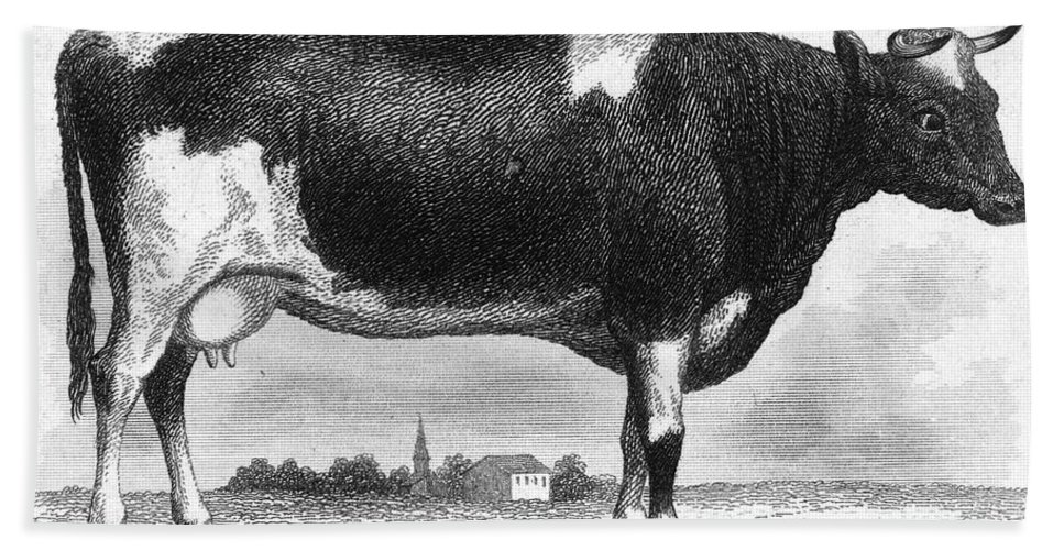 19th Century Bath Sheet featuring the photograph Cattle, 19th Century by Granger