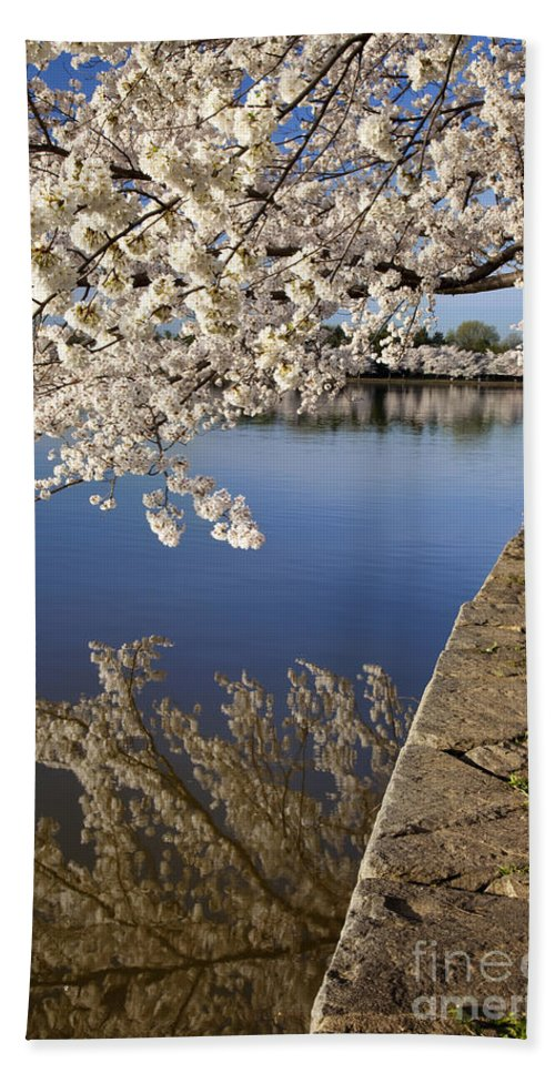 Blossom Hand Towel featuring the photograph Cherry Blossoms by Brian Jannsen
