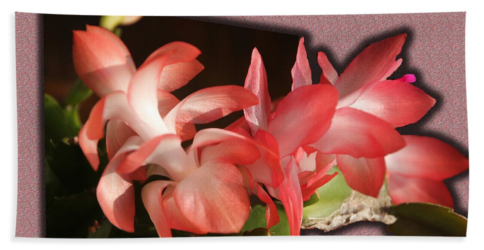 Tn Bath Sheet featuring the photograph Christmas Cactus by Ericamaxine Price