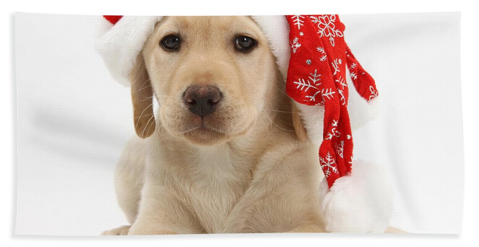 Animal Hand Towel featuring the photograph Christmas Puppy by Mark Taylor