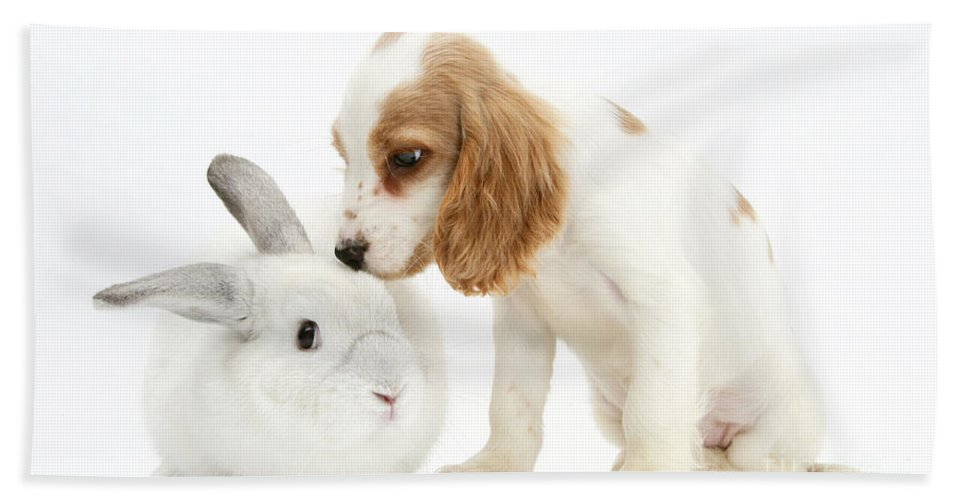 Nature Hand Towel featuring the photograph Cocker Spaniel And Rabbit by Mark Taylor