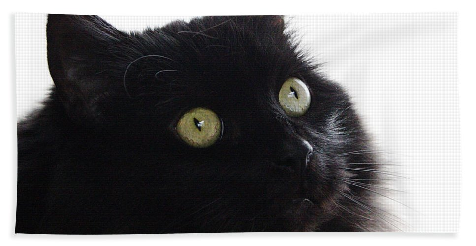 Cat Bath Sheet featuring the photograph Coco by Jeff Galbraith