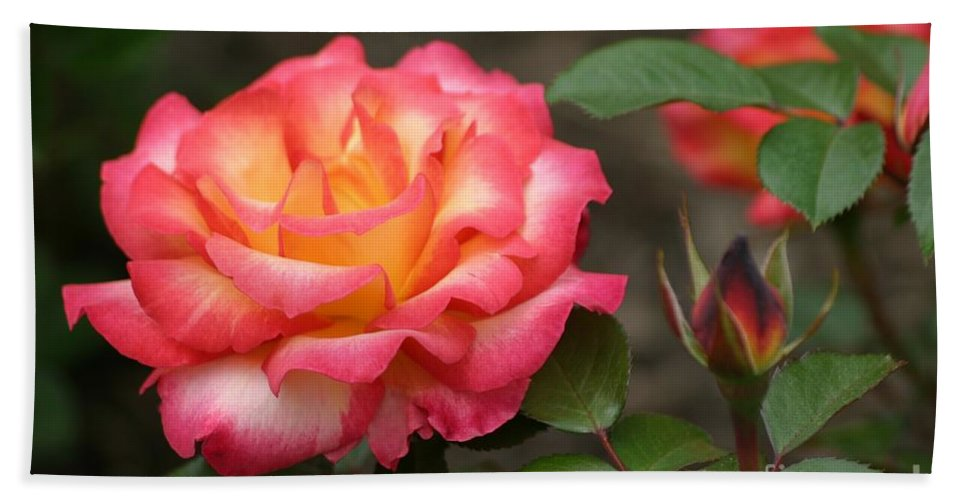 Roses Hand Towel featuring the photograph Color My World by Living Color Photography Lorraine Lynch