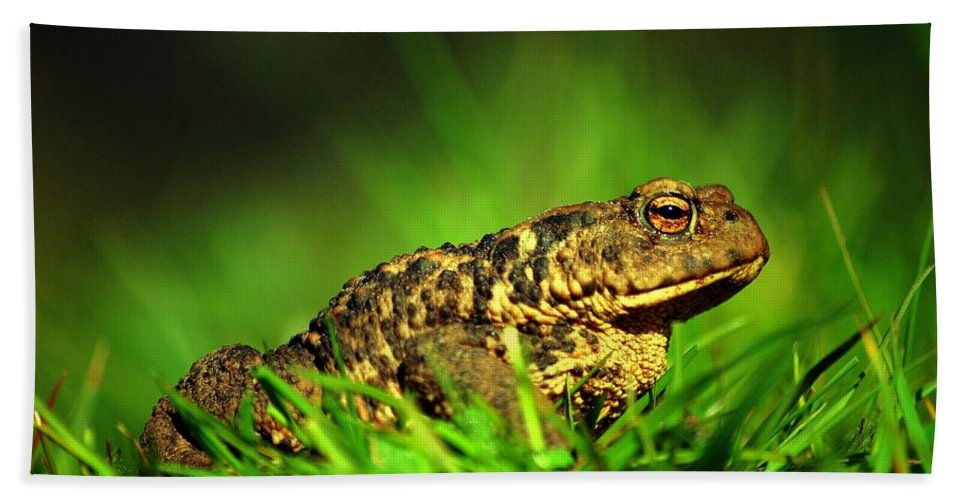 Common Toad Hand Towel featuring the photograph Common Toad by Gavin Macrae