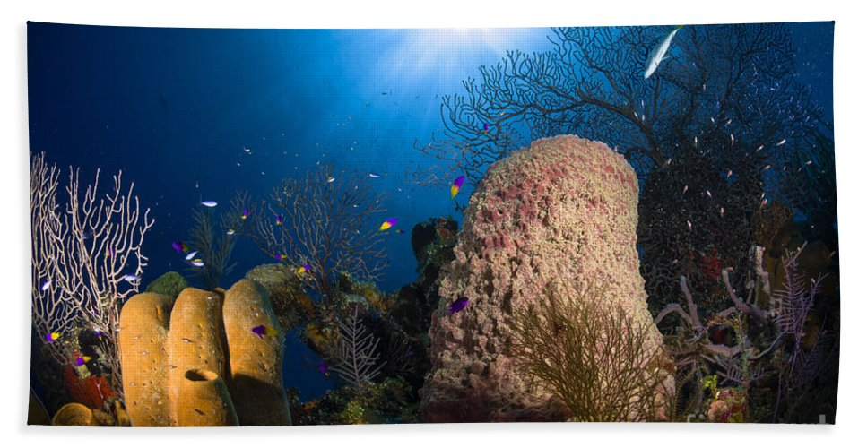 Sea Life Hand Towel featuring the photograph Coral And Sponge Reef, Belize by Todd Winner