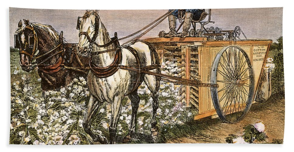 1886 Hand Towel featuring the photograph Cotton Harvester, 1886 by Granger