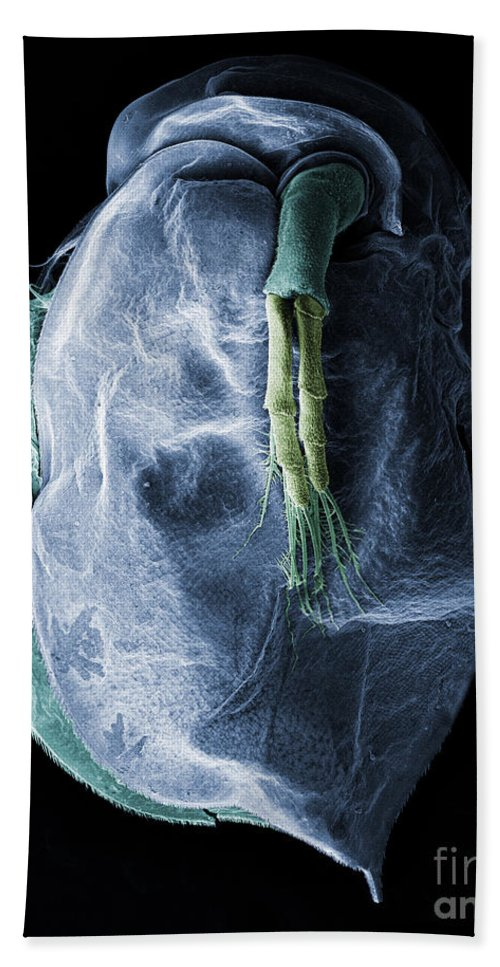 Water Flea Hand Towel featuring the Daphnia Magna, Sem by Ted Kinsman