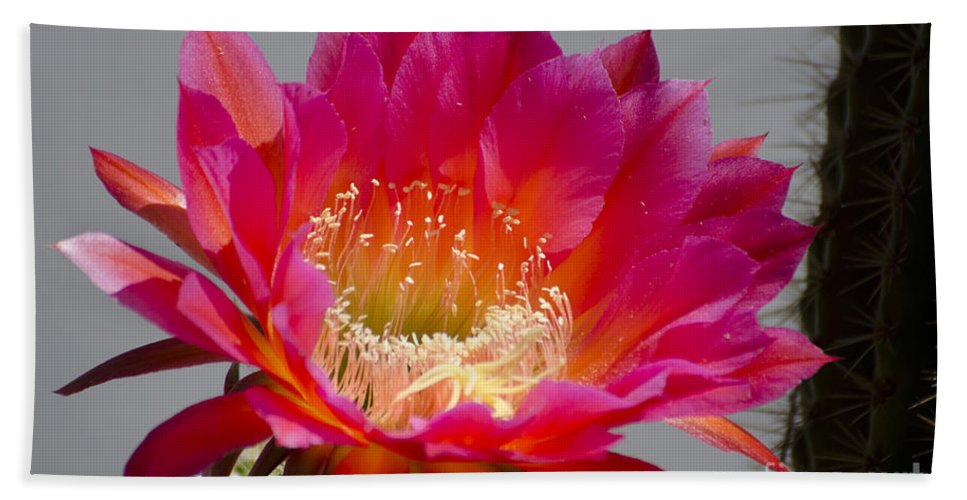 Cactus Hand Towel featuring the photograph Deep Pink Cactus Flower by Jim And Emily Bush
