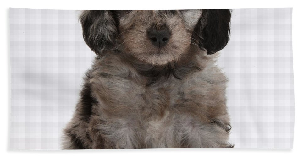 Nature Hand Towel featuring the photograph Doxie-doodle Puppy by Mark Taylor