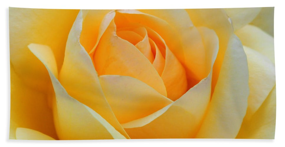 Rose Hand Towel featuring the photograph Dreamy Rose by Dave Mills