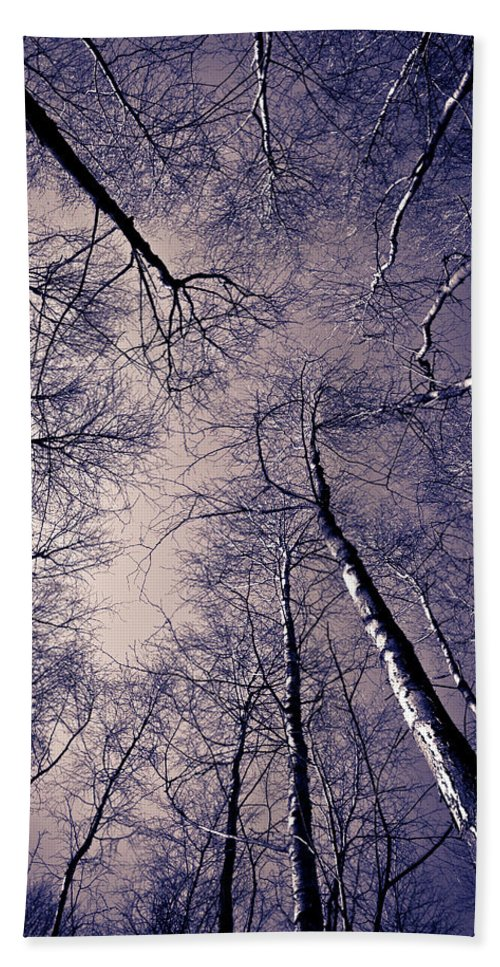 Epping Hand Towel featuring the photograph Epping Forest Trees by David Pyatt